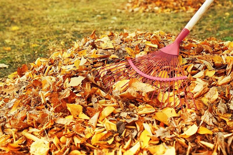 Опавшая листва не является ТКО
