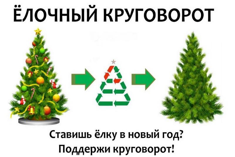 Как правильно выбрасывать новогодние ёлки