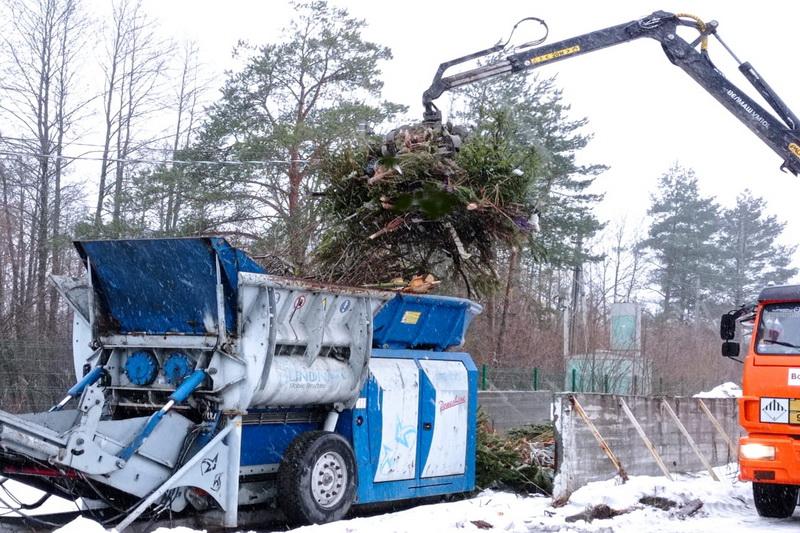 """Ответственное потребление: """"Чистая планета"""" перерабатывает новогодние елки в щепу"""