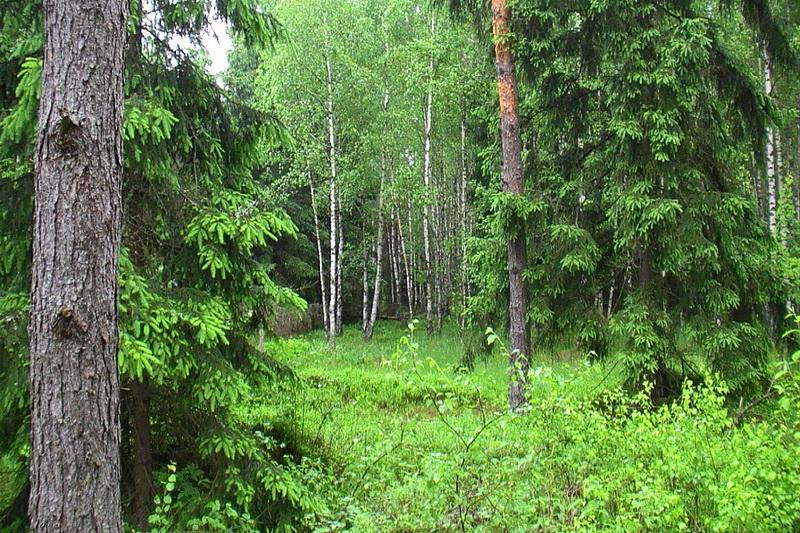 Чистый лес с «Чистой планетой»